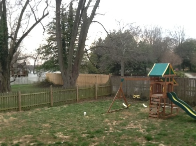 Back from NY, our backyard demolished by renters dogs!
